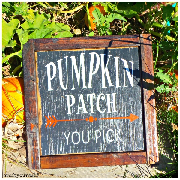 rustic-pumpkin-patch